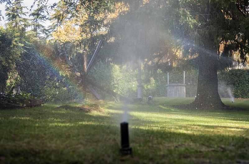 Métodos para ahorrar agua en el jardín - Escorial Green