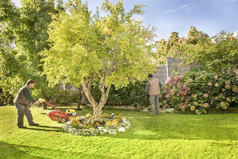 Cómo cuidar un jardín en invierno - Escorial Green