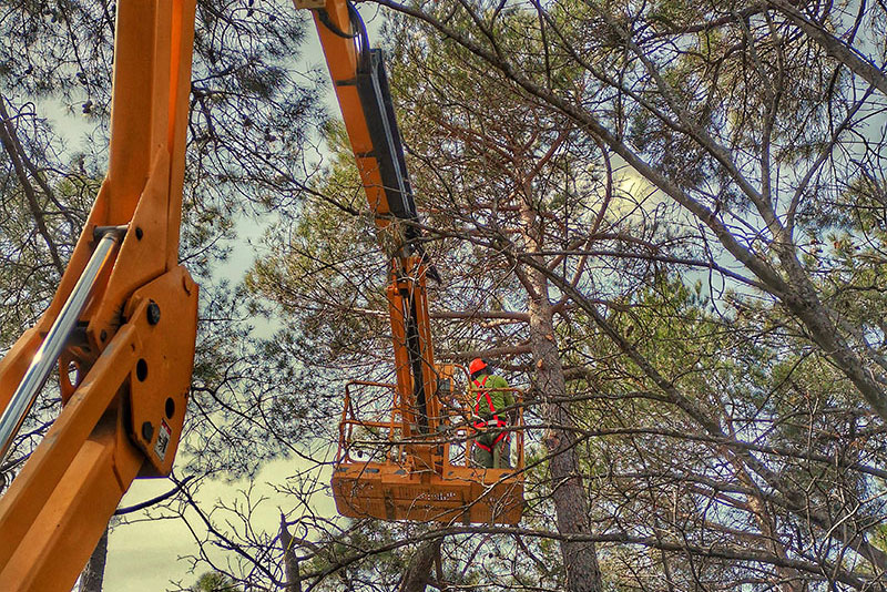 Podar árboles y plantas - Escorial Green