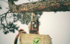 Poda y tala de árboles - Escorial Green